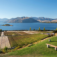 Rippon is a vineyard perched on the edges of Lake Wanaka in Wanaka, Otago, New Zealand. Contact: Pete Eastwood pete.eastwood@rippon.co.nz