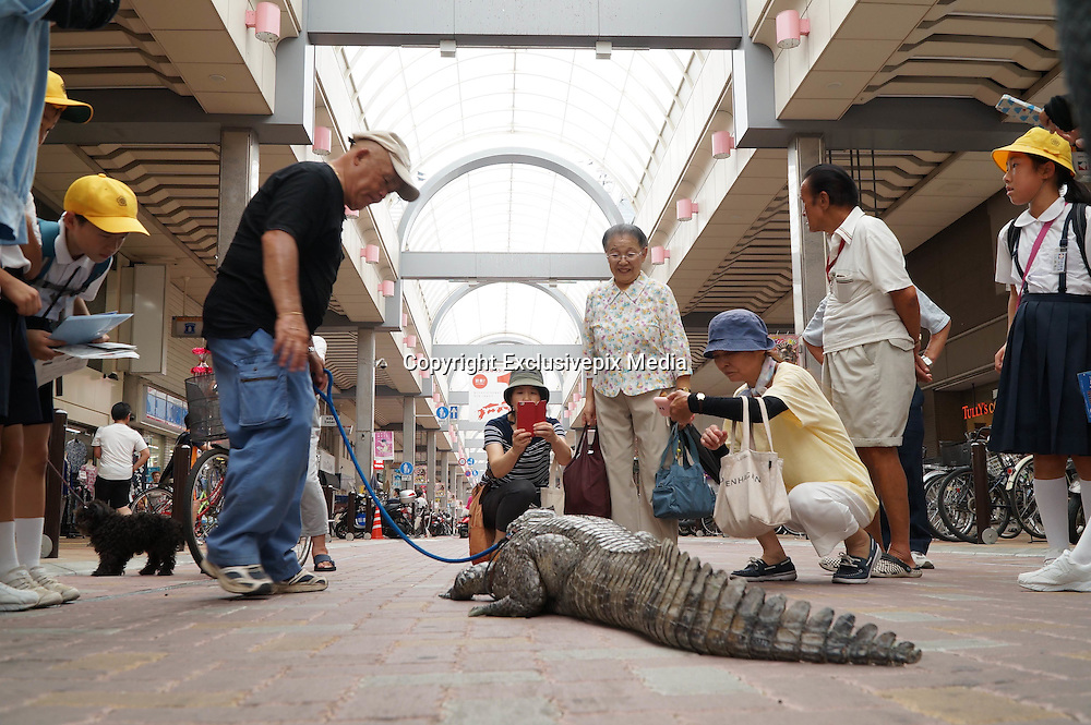 VIDEO AVAILABLE - JAPAN OUT<br /> <br /> Man lives  with 2 meter alligator<br /> <br /> In Kure City, Hiroshima, Japan, lives Mr. Nobumitsu Murabayashi, a 65 year old man who has been living with an alligator for 34 years. The alligator&rsquo;s name is Caiman, and it is a male spectacled caiman. He bought the baby alligator at a festival without thinking too much about it, and now it&rsquo;s grown into a hefty 2.1 meters and 46 kilograms. Though Mr. Murabayashi keeps a massive tub of water in front of his house for Caiman, he roams freely, spending a lot of his time in the tatami room, or sometimes the bathroom. Because of this, he has to have the tatami renewed once a year, and the sliding paper doors are full of holes. Despite that, Mr. Murabayashi cares for Caiman like his own son, and when he has time he takes him for walks in the city. Don&rsquo;t worry, he has permission from the city government! He&rsquo;s been featured in TV shows before, and many people know about him, but still, when people see the huge alligator walking down the street, even the locals stop and stare at him closely. With his children all grown up and independent, Mr. Murabayashi now showers Caiman with all of his attention. Caiman, who is expected to live another 20 to 30 years, has become the joy of Mr. Murabayashi&rsquo;s life. <br /> &copy;Exclusivepix Media