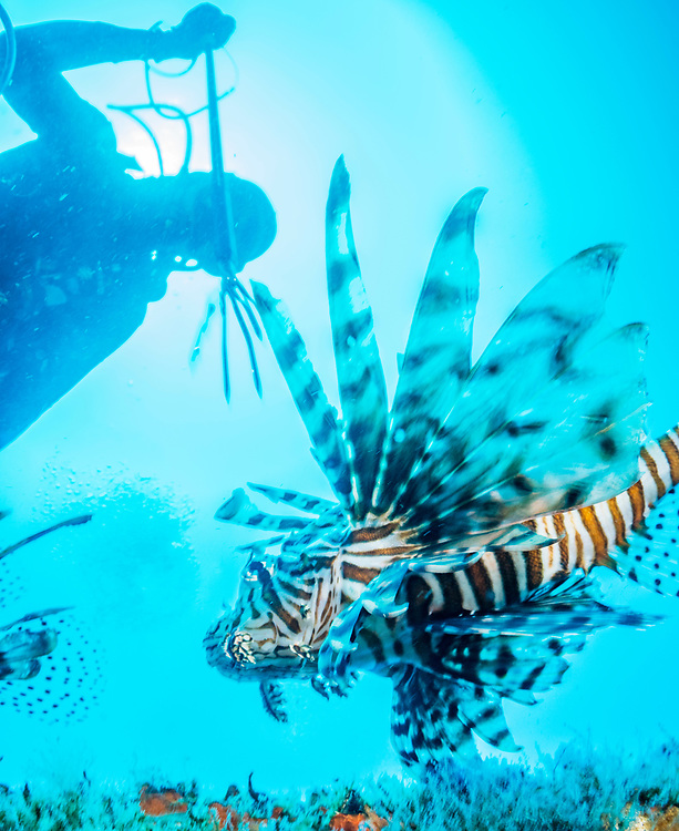 Marine biologist and commercial lionfish hunter Alex Fogg is efficient at clearing out lionfish, but even he can't go as deep as lionfish.