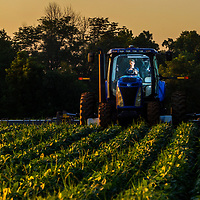 John Paul Franks of Oak Ridge Farms in his tractor while going through a soy field in Pendleton, Ind. on Tuesday, July 24, 2018.