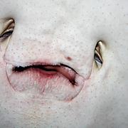 Southern Stingray Closeup of mouth