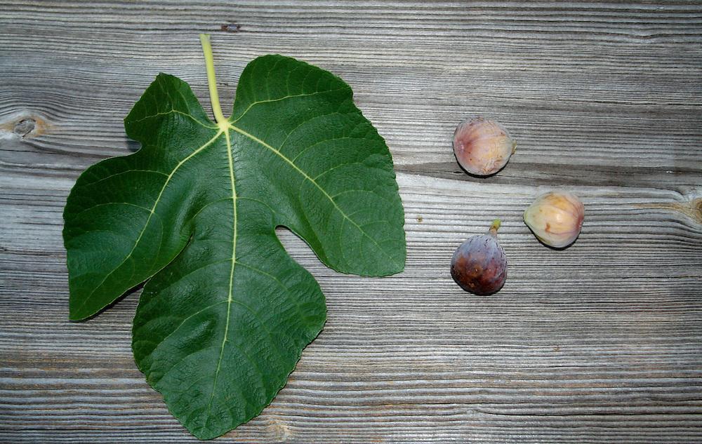 Fig Leaf and Fruit