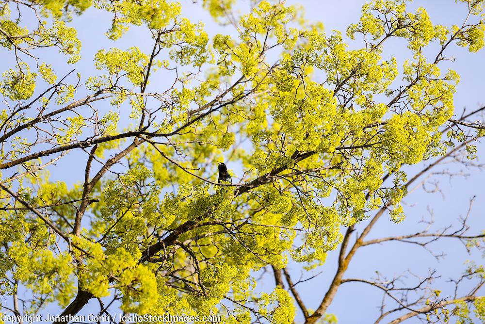 Bird in tree in Boise's Hyde Park