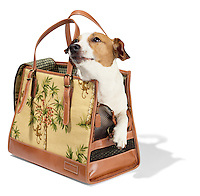 Isabella Fiore dog carrier bag with dog on white background