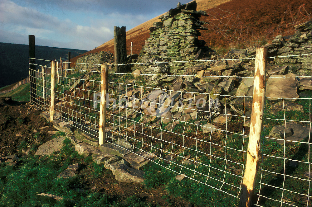 End of dry stone wall; replaced  with wire fencing