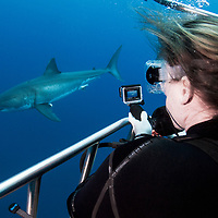 Guadalupe, Mexico is a major destination for tourists wanting to get close to great white sharks (Carcharodon carcharias)