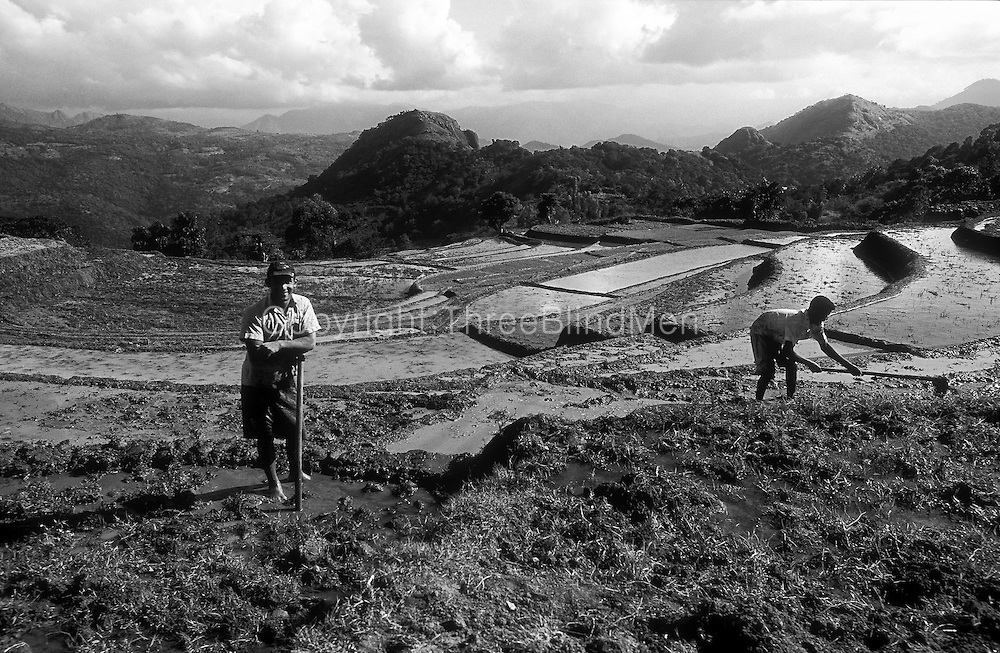 Sri Lanka. Preparing fields for planting.. Looking over the Dumbara valley. Central hills..January 2004