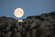 Polarbear sleaping on a rock under the full moon at Karl XII island, Svalbard (Spitzbergen) | Isbjørn som sover på et berg på Karl XII øyen, nord for Nordaustlandet, Svalbard.