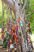 THIMMAMMA MARRIMANU, INDIA - 29th October 2019 - Prayer offerings tied to Thimmamma Marrimanu banyan tree - the world's largest single tree canopy. Andhra Pradesh, India. <br /><br />Many believe that the tree has mystical powers and is able to bless childless couples with the gift of fertility. There is a very strong belief that if a person or couple ties a saffron ribbon, bangles or a small pouch containing natural offerings like leaves and spices to the tree, the goddess will bless them with fertility within one year of placing the offering.