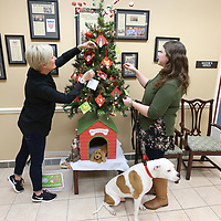 Jennifer Caldwell, of Tupelo, a volunteer for the Tupelo-Lee Humane Society, and Rachel Allred, Director of the Tupelo-Lee Humane Society, decorate the Santa Paws Christmas Tree, as Jackson, sits and waits. The tree is set up inside the Mayor's office in Tupelo with many other locations in town and decorated with tags that have the needs of pets and the humane society posted on the back.