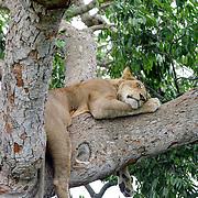 Queen Elizabeth National Park, Uganda, Africa
