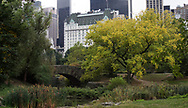 The Pond and Gapstow Bridge in Central Park with a view of the Plaza Hotel