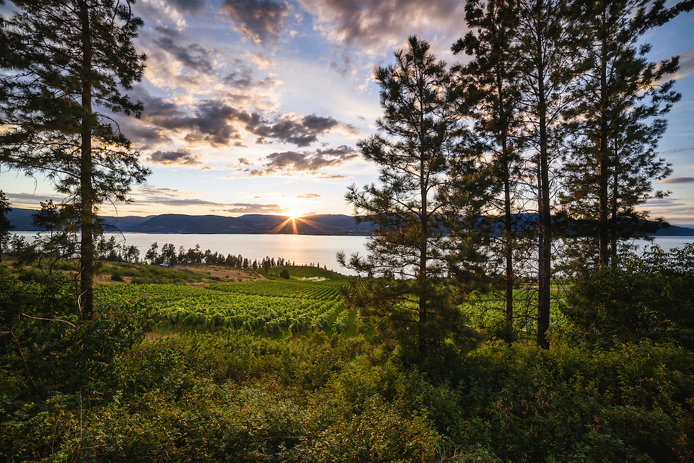 Sunset, St Hubertus Estate Winery, Kelowna, BC