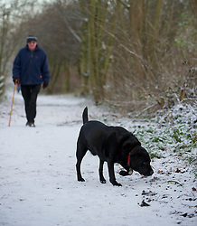© Licensed to London News Pictures. 05/12/2012..Yorkshire and Cleveland, England..A dog walker makes his way through the woods as overnight snow fall brings the first signs of the wintery weather that is forecast for the rest of this week to North Yorkshire...Photo credit : Ian Forsyth/LNP
