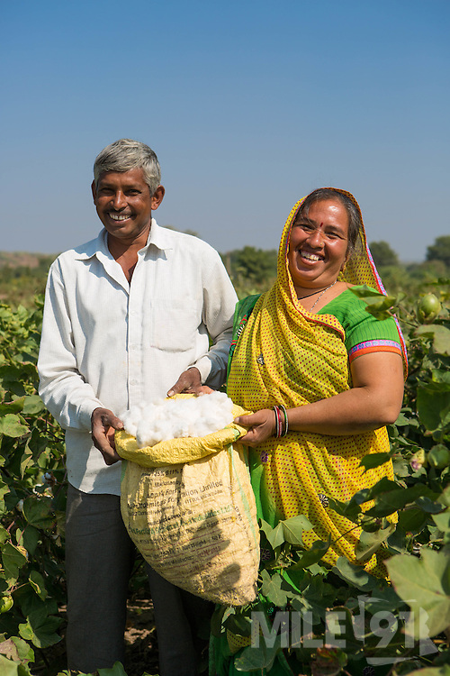 A portrait of Vallabh and his wife, Prabhaben, harvesting cotton on their farm in Ahmedabad, India.<br /> <br /> They have recently installed some drip irrigation on their farm and they are seeing some real improvements in their cotton plants but they are also saving water and time.