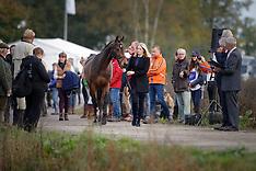 Final Horse Inspection - Boekelo 2017