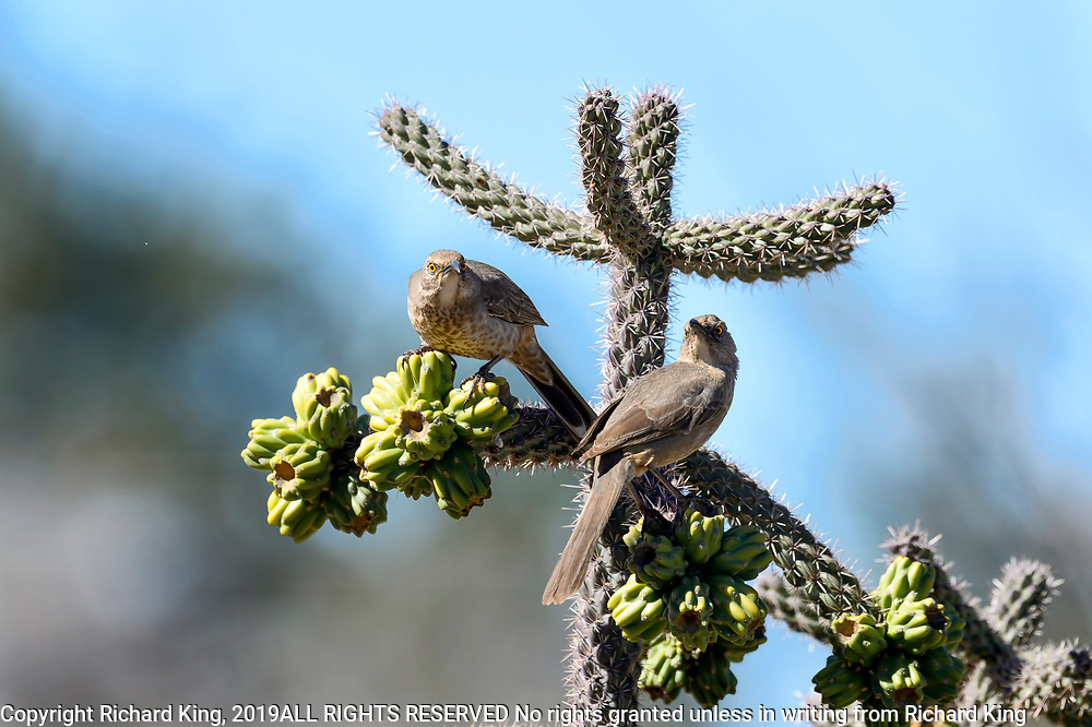 Wildlife photography from Benson, Arizona, USA