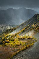 Subalpine Larches on slopes near Slate Peak, Pasayten Wilderness, North Cascades Washington