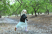 Young girl of four, runs in an almond grove with the ground covered with blossoms. Model release available