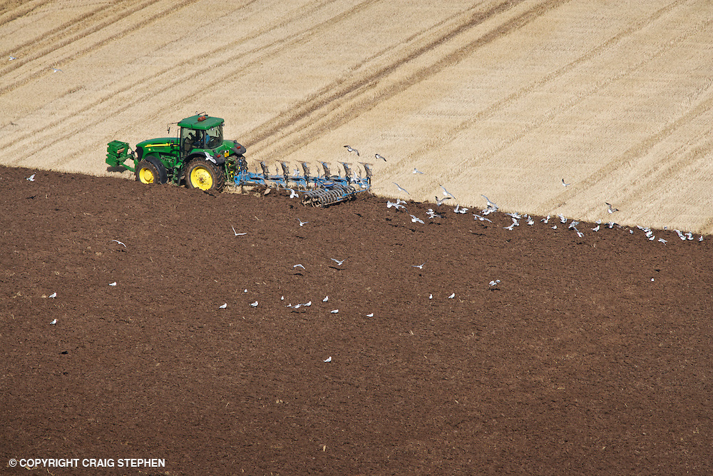 Tractor ploughing a stubble field