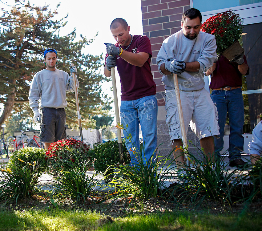 Mums planted at the Graduate Housing and Larzelere Hall on Friday September 27, 2013.