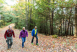 Walking a woods road in Barrington, New Hampshire. Fall.