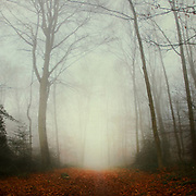 Re-edit of two images I shot several years ago on a misty late autumn day. I merged them to this verical panorama<br />