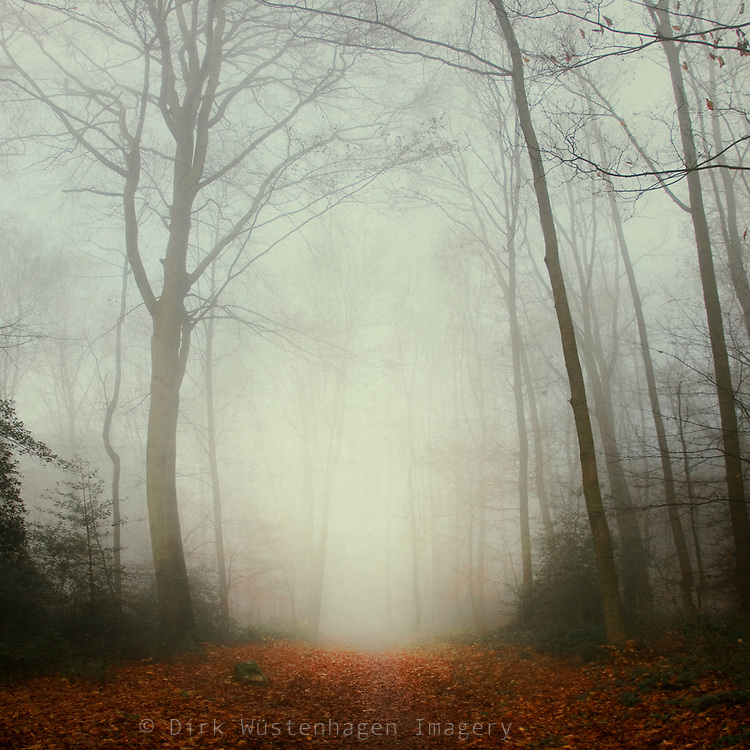 Re-edit of two images I shot several years ago on a misty late autumn day. I merged them to this verical panorama<br /> Society6 prints: http://bit.ly/2qLVpHI