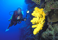 A woman SCUBA diver uses her underwater Nikonos camera to photograph yellow coral on the Wall at Little Cayman Island.