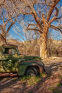1953 International Pickup Truck, cottonwood trees, Abiquiu, New Mexico