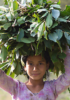 Beautiful young Tharu girl carrying leaf fodder on her head for her livestock, Terai region in Nepal
