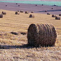 Rolls of hay in a French farm field