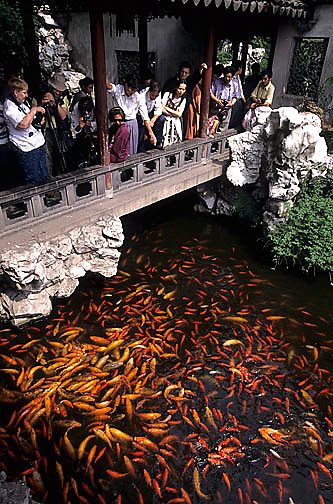 China, Cities, Tourists looking at carp or goldfish in pond in city of Shanghai.