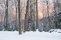 Winter sunrise.  ©2016 Karen Bobotas Photographer
