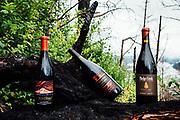 Oregon Wine Press- Smokey Pinot Trail
