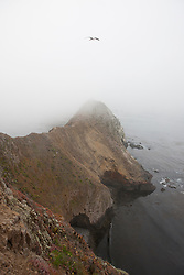 Cliffs covered with mist, Anacapa Island, Channel Islands National Park, California, United States of America