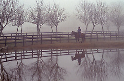 riding a horse along a pond in the fog