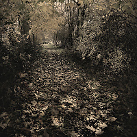 A country path in Autumn with falling leaves in England