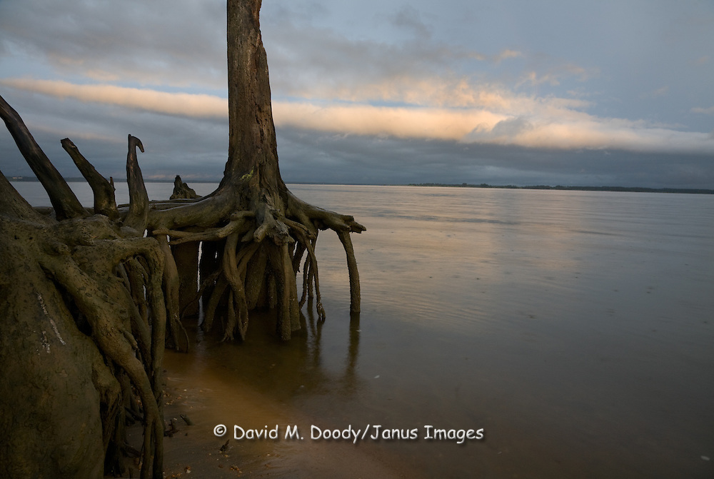 "Rain falling on the James River with exposed tree roots in foreground. Dramatic clouds at sunset along the Colonial National Parkway between Jamestown and Williamsburg Virginia. The Colonial National Historical Park (U.S. National Park Service,) is in Virginia's ""Historic Triangle"""