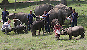 ASSAM (INDIA), April 13, 2016 <br /> <br /> British Prince William (1st L) and his wife Kate Middleton (3rd R) feed rhinos and elephants at the Centre for Wildlife Rehabilitation at Panbari reserve forest in Kaziranga, Indian northeastern state of Assam, on  April 13, 2016. British Prince William and his wife Kate Middleton on Wednesday got a taste of India's wildlife by visiting the Kaziranga National Park in the northeastern state of Assam, home to two-thirds of the world's Indian one-horned rhinos. <br /> ©Exclusivepix Media