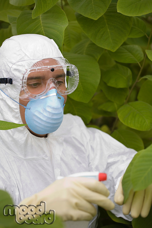 Worker in protective mask and suit spraying plants