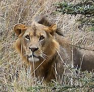 Kenyan Wildlife 2016