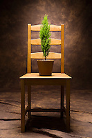 A small green tree in a pot on a wooden chair.