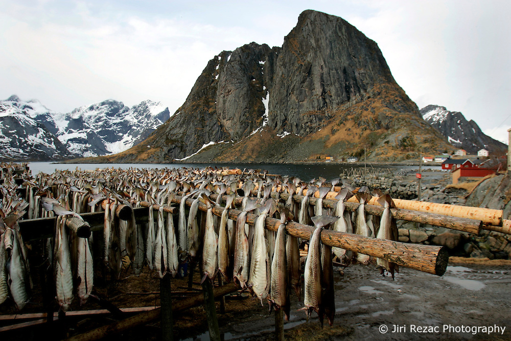 NORWAY LOFOTEN 29MAR07 - Stockfish racks in Hamnoy on the Lofoten islands...jre/Photo by Jiri Rezac..© Jiri Rezac 2007..Contact: +44 (0) 7050 110 417.Mobile:  +44 (0) 7801 337 683.Office:  +44 (0) 20 8968 9635..Email:   jiri@jirirezac.com.Web:    www.jirirezac.com..© All images Jiri Rezac 2007 - All rights reserved.