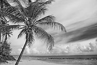Beach with coconut palms in silky sky