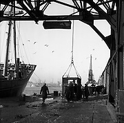 """16/01/1960<br /> 01/16/1960<br /> 16 January 1960<br /> Horses for slaughter being loaded for export to the Netherlands from Dublin. Crane loading horses onto the """"City of Waterford""""."""
