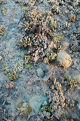 A diversity of corals, sponges and algaes on Turtle Reef in Talbot Bay.