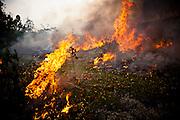 Slash and burn agriculture in Yen Bai Province, Vietnam, Southeast Asia.