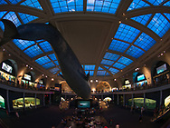The American Museum of Natural History (AMNH) in New York City.
