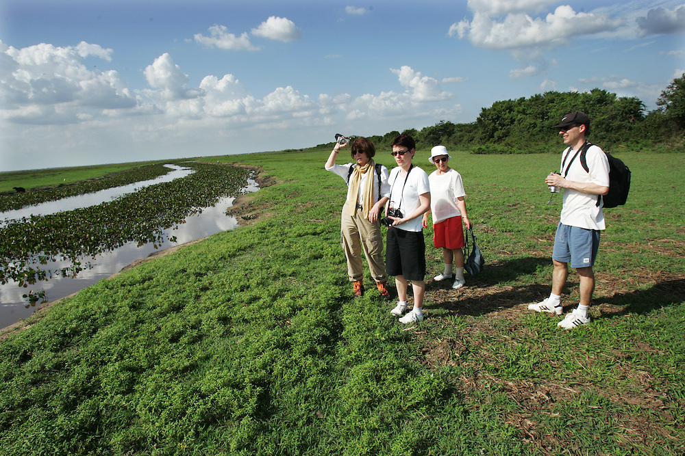 """A group of French and European tourists visit Los Llanos in Venezuela. Los LLanos are the grasslands in western Venezuela famous for the """"llanera"""" culture of cowboys and music.  Many working """"Hatos"""" , or cattle ranches, dot the landscape of grasslands and river systems, offering tourists a chance to see the beautiful landscape and various wildlife.  Tourists go out on land and water excursions where they get a chance to see see caiman, orinoco crocodile, anaconda, piranha, numerous bird species and capybara, the world's largest rodent."""